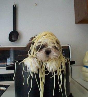 I's got da recipe from da Tramp. He wooo'd Lady wif it!