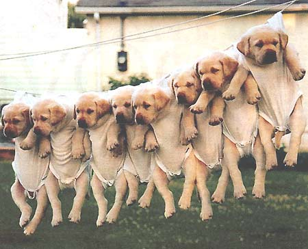 Little pups in trouble... *sniff*